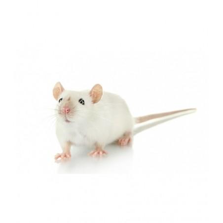 Souris congelée mouse crawler 8 gr - 7 jours