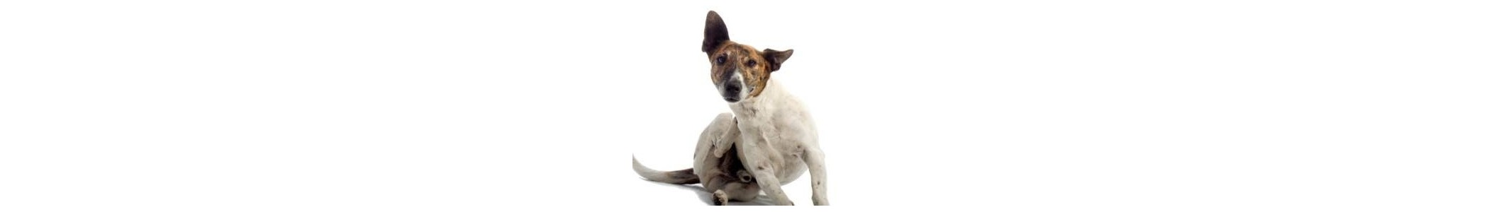 Anti parasites puces et tiques pour chien